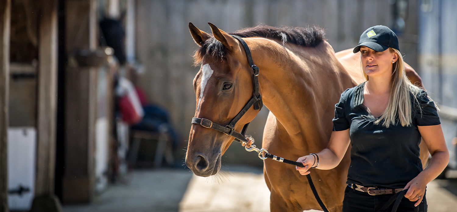 Choose BedKind for a happier, healthier horse