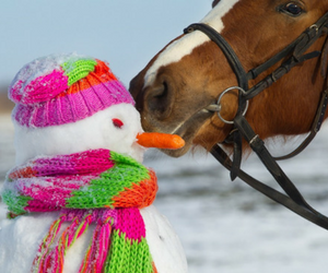Christmas gifts for your horse