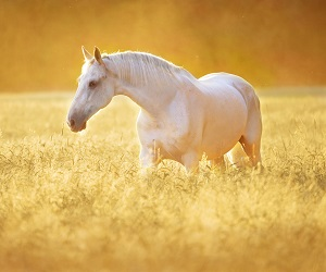 Spring into action for your horse